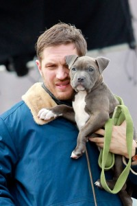 Tom+Hardy+Tom+Hardy+Films+Animal+Rescue+Cuddly+keav5rsxIUGl